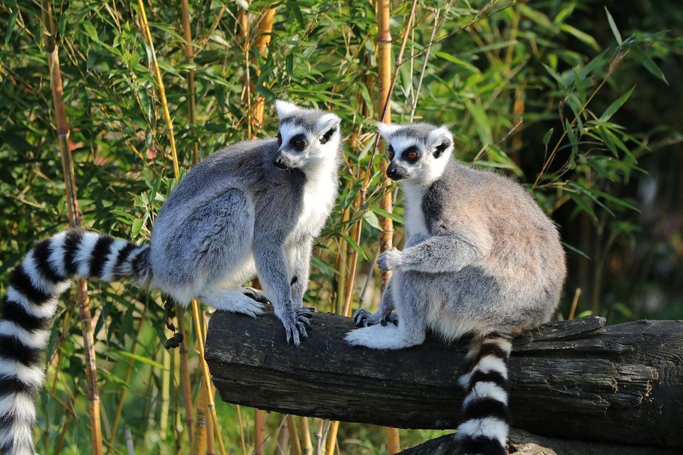 Profiter le temps d'un séjour en Afrique pour visiter Madagascar